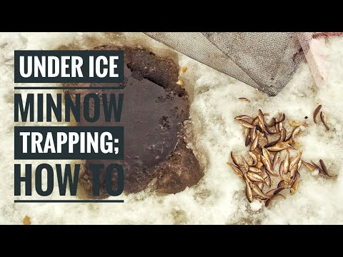 Trapping MINNOWS Under ICE  | Setting And Checking Traps [2018]
