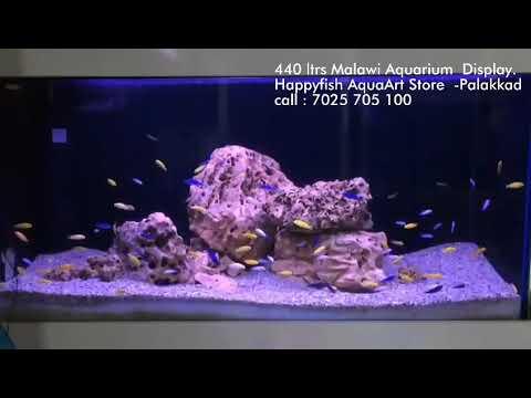 Happy fish Aqua Art  Store. Malawi Aquarium concept display .