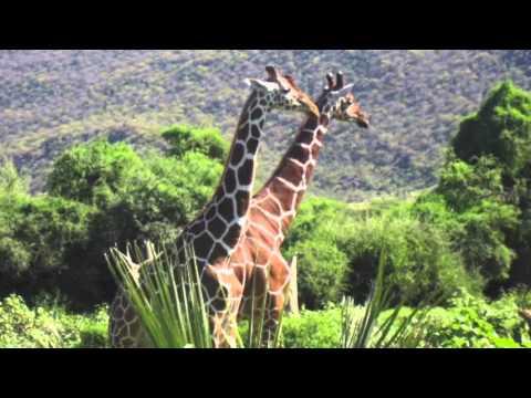 SUPT Thrive Service Initiative: Maua, Kenya 2012/2013