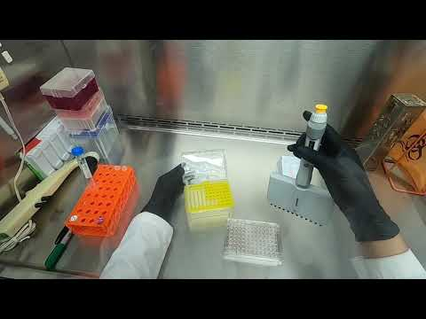 Download Cytotoxicity  Assay