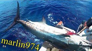 NOTRE PREMIER MARLIN PÊCHE  EN  MER (sea fishing ) à la réunion