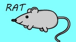 How To Draw a Rat I Kids Learning Video