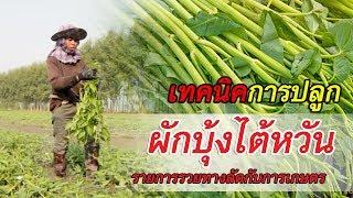 รวยทางลัดกับการเกษตร ผักบุ้งไต้หวัน อ่างทอง (1/3)