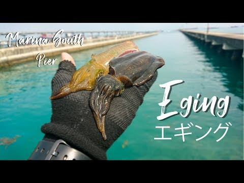 Shore Squid Fishing: Eging At Marina South Pier Singapore エギング