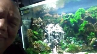 Aquascape Semarang
