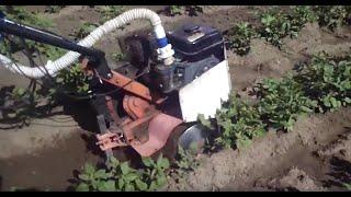 Первичная прополка и рыхление картофеля мотокультиватором