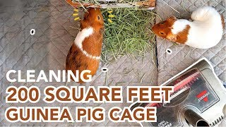 Best Way to Clean Guinea Pig Cage | GuineaDad