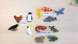 DIY ACTIVITIES FOR CHILDREN - ANIMAL CLASSIFICATION