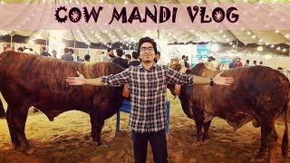 Sohrab Goth Cow Mandi 2018 | Ubaid Khan