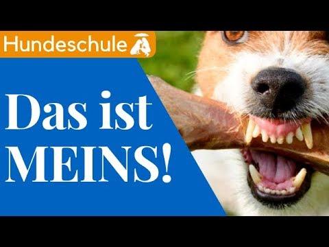 Teddy Teilt Nicht / 1.000 Abonnenten Special /  Mia and Me DogTV