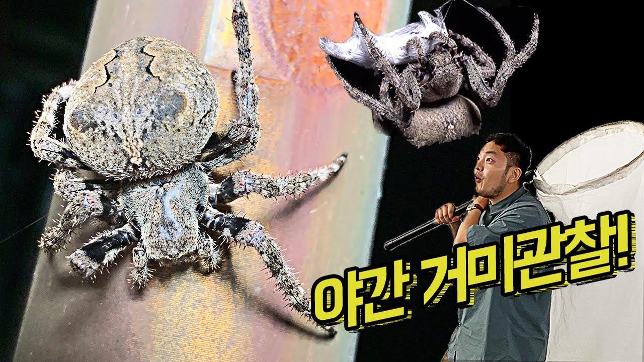 야산에서 타란튤라급 '거미' 발견! 야간 거미 관찰