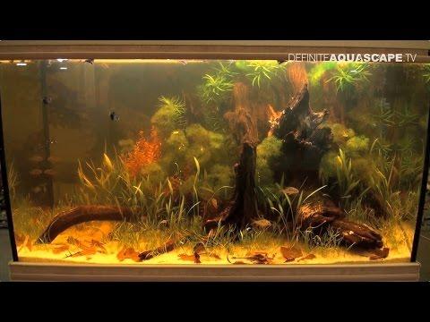 Biotope Aquarium Design Contest 2015 - the 1st place, South America