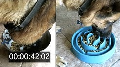 HIS NEW BOWL TESTED |  SLOW FEEDER DOG BOWL