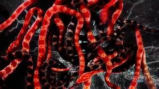 Ядовитые змеи  Пресмыкающиеся   Документальный фильм