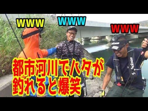 ミノーで釣るロックショアゲーム!!都市河川で高級魚がフィッシングギャング