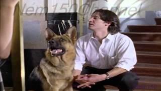 Kommissar Rex-Richard(1x4)