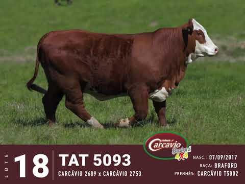 LOTE 18 - TAT 5093