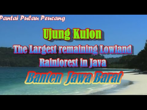 Ujung Kulon. The Largest remaining Lowland Rainforest in Java. Banten, West Java 004