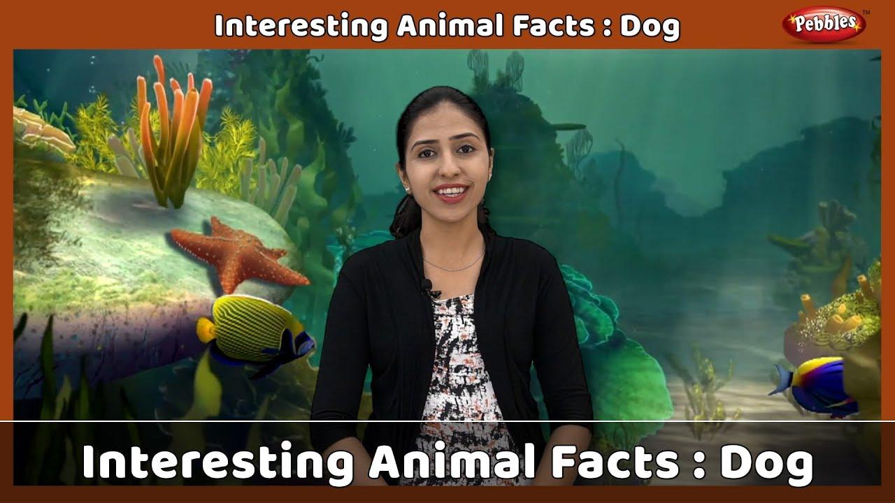Interesting Animal Facts : Dog | Dog Essay English | Dog Quiz | Dog Song |  Dog Story | Learn Animals