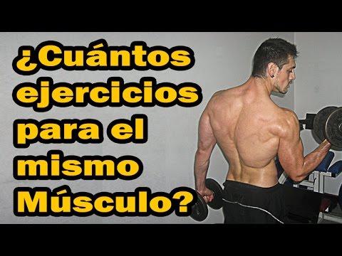 Que musculos se trabajan por dia en el gym