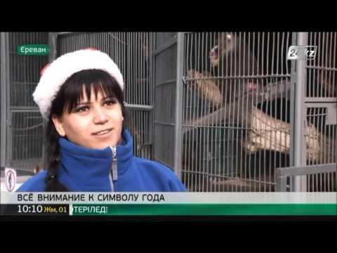 Обезьяны в Ереванском зоопарке получили подарки к Новому году