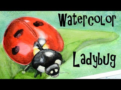 Painting a Watercolor Ladybug with Winsor & Newton Watercolors Demonstration