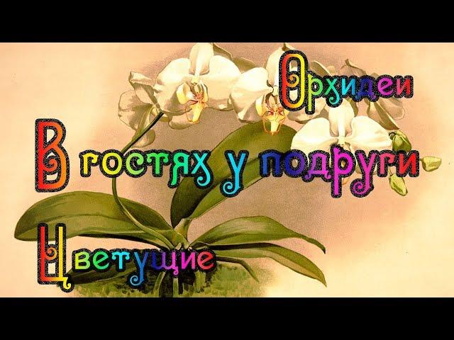 В гостях у подружки Орхидеи (Новый год)