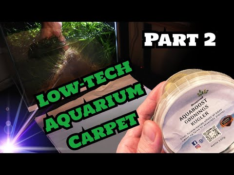 Dwarf Sagittaria Subulata Experiment (Aquarium Carpet in Sand, Gravel & Soil)