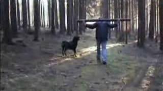 Rottweiler Video.