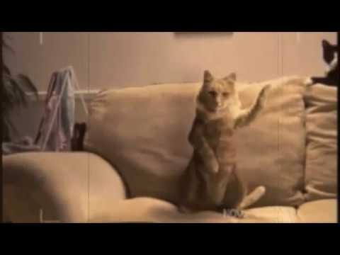 Cats Dancing Salsa