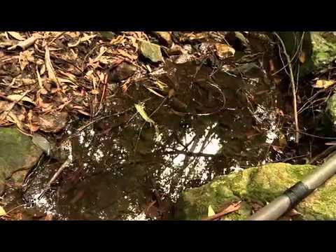 Good News: Agroecologia Garante A Preservação Do Meio Ambiente