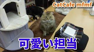 可愛い担当のアーサー(=^・^=) 手からおやつを食べるのが上手 可愛いか...