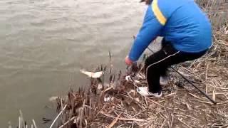 видео На что ловить карпа в ноябре