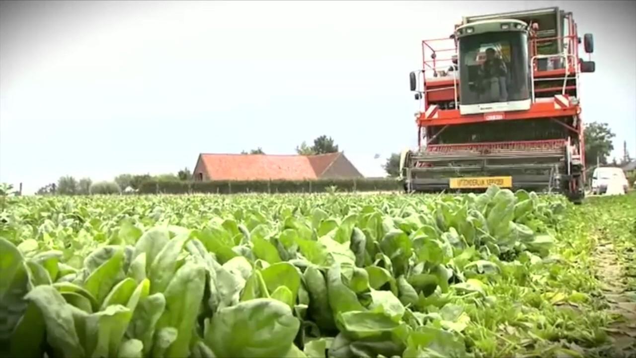 Foodnet Ltd Frozen Foods Supplier Video