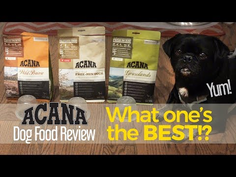 Do You Know Which Variety Of ACANA Kilo Liked Best? Dog Food Product Review.