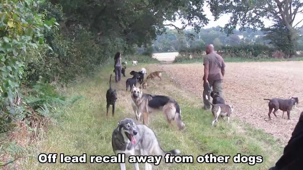 Reggie Doberman 14 Day Dog Boot Camp Residential Dog