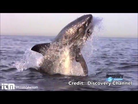 Shark & Lion Attacks on World&39;s Greatest Animals