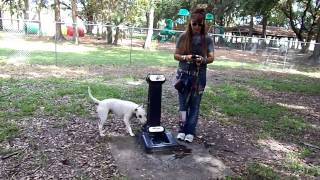 Deaf Dogs And Checkers Dog Park Dogtra Remote E Collar Pager