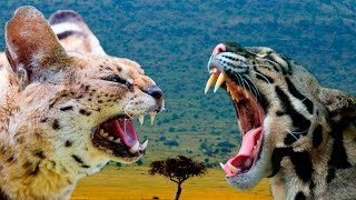 serval-vs-ocelot-cat-differences-explained