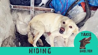 Sick dog hides in a warehouse from the rain but she won't need to do that again - Luna-Takis shelter