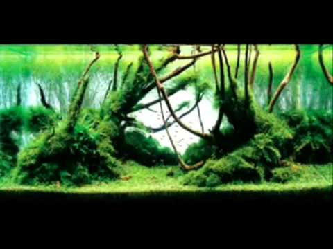 Những Hồ Thủy Sinh Đẹp Nhất Thế Giới -  Thiên Đường Cá Cảnh