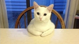 20 Strange Cat Behaviors Explained!
