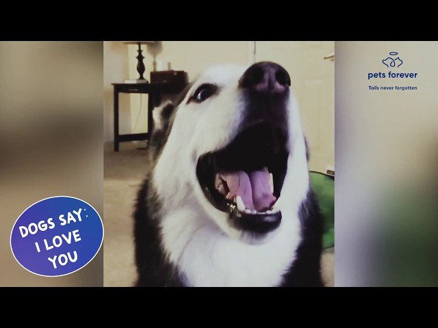 👉 Top 10 Best Amazing  lovely Talking Dog - Do Dogs really say I Love You !!! ☑️#Petsforever