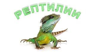 Рептилии. Развивающее видео. Познаём Мир.