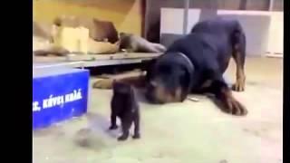 Clip - Động vật hài hước p2 ( Funny animals )