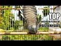Pancingan Burung Perkutut Lokal Pasti Cepat Nyaut  Mp3 - Mp4 Download