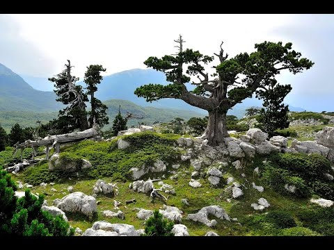 Mother Nature - wonderful wildlife, outdoor adventure and travel HD video(Italy Calabria natura)