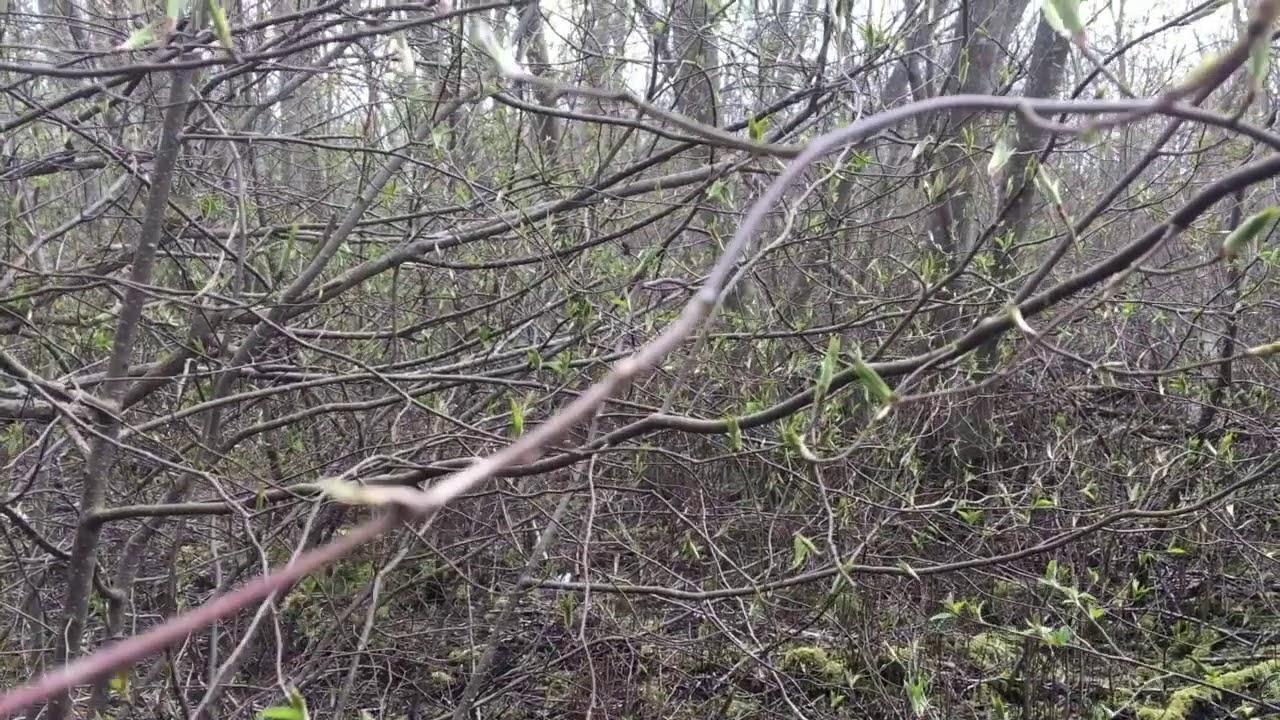 Filosofía en el bosque 1. La percepción.
