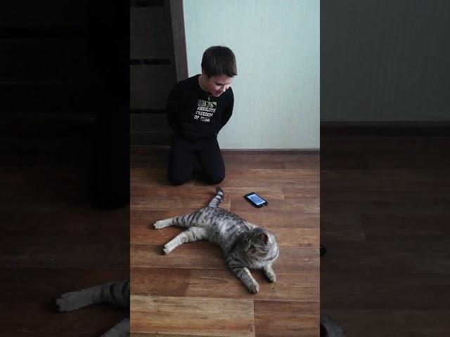 Изображение предпросмотра прочтения – ЕгорВасиленко читает произведение «Кошки» М.И.Цветаевой