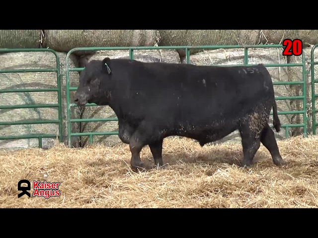 Kaiser Angus Ranch Lot 20